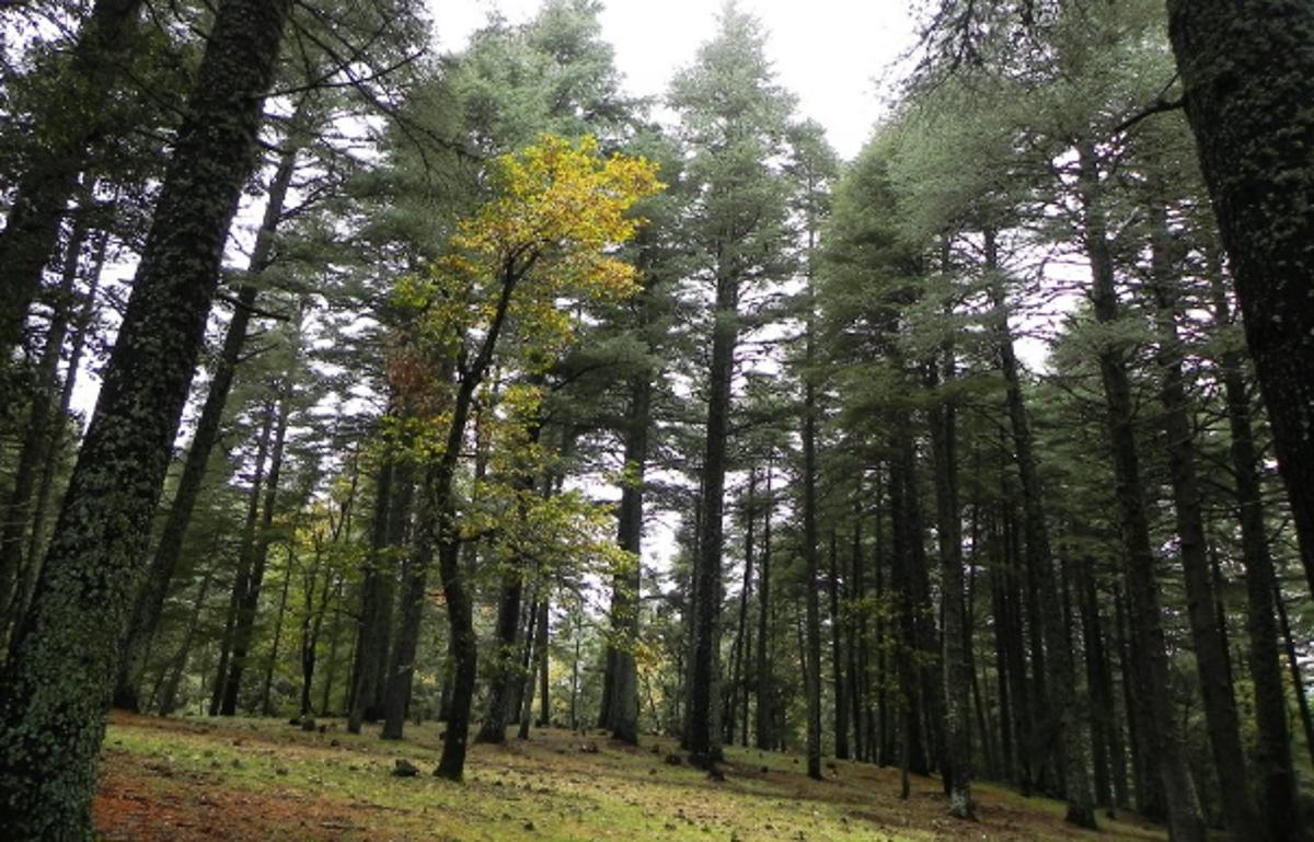 La FAO met un pouce bleu au projet marocain sur la biodiversité durable