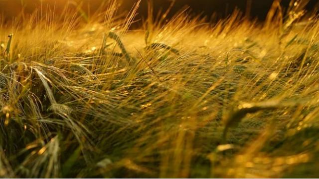 Une enveloppe de 350 millions de dirhams est offerte aux agriculteurs marocains