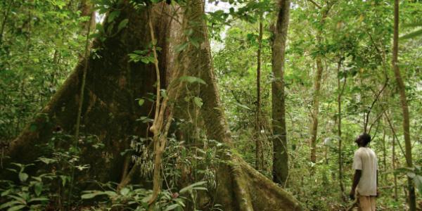Le Togo veut restaurer 35.000 hectares de forêts en 2020