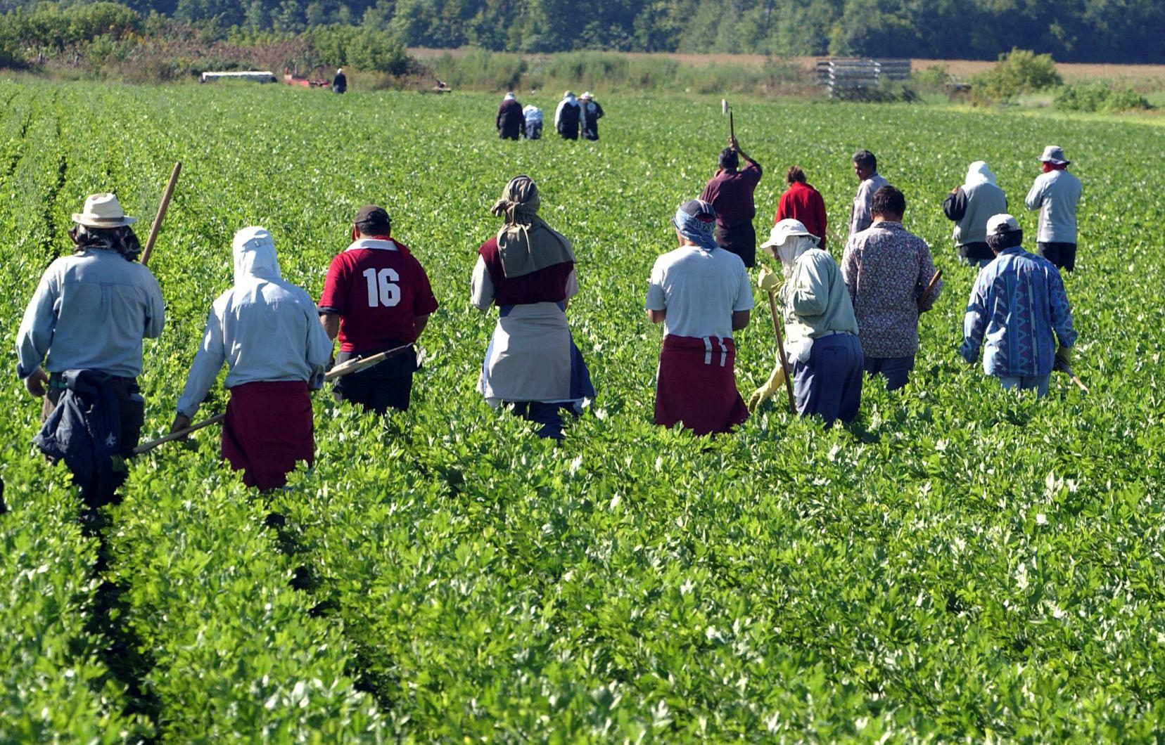 L'Italie veut régulariser la situation de 200.000 immigrés clandestins afin de servir dans les champs