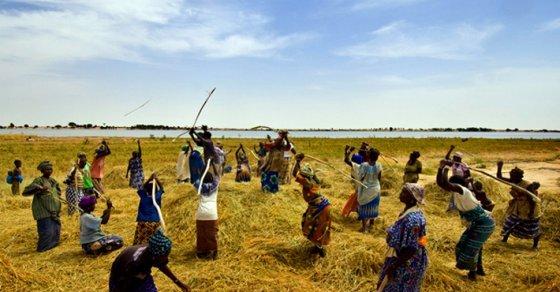 Le Bénin classé 56ème mondial des pays exportateurs de produits bio vers l'Europe, et 20ème africain