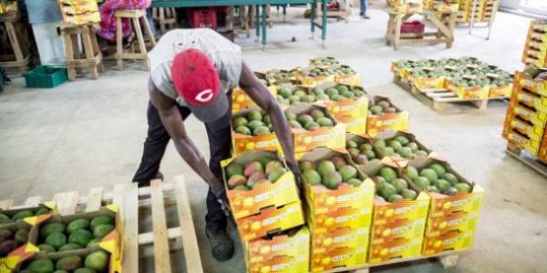 Le Togo est le deuxième pays exportateur africain de produits bio vers l'Europe