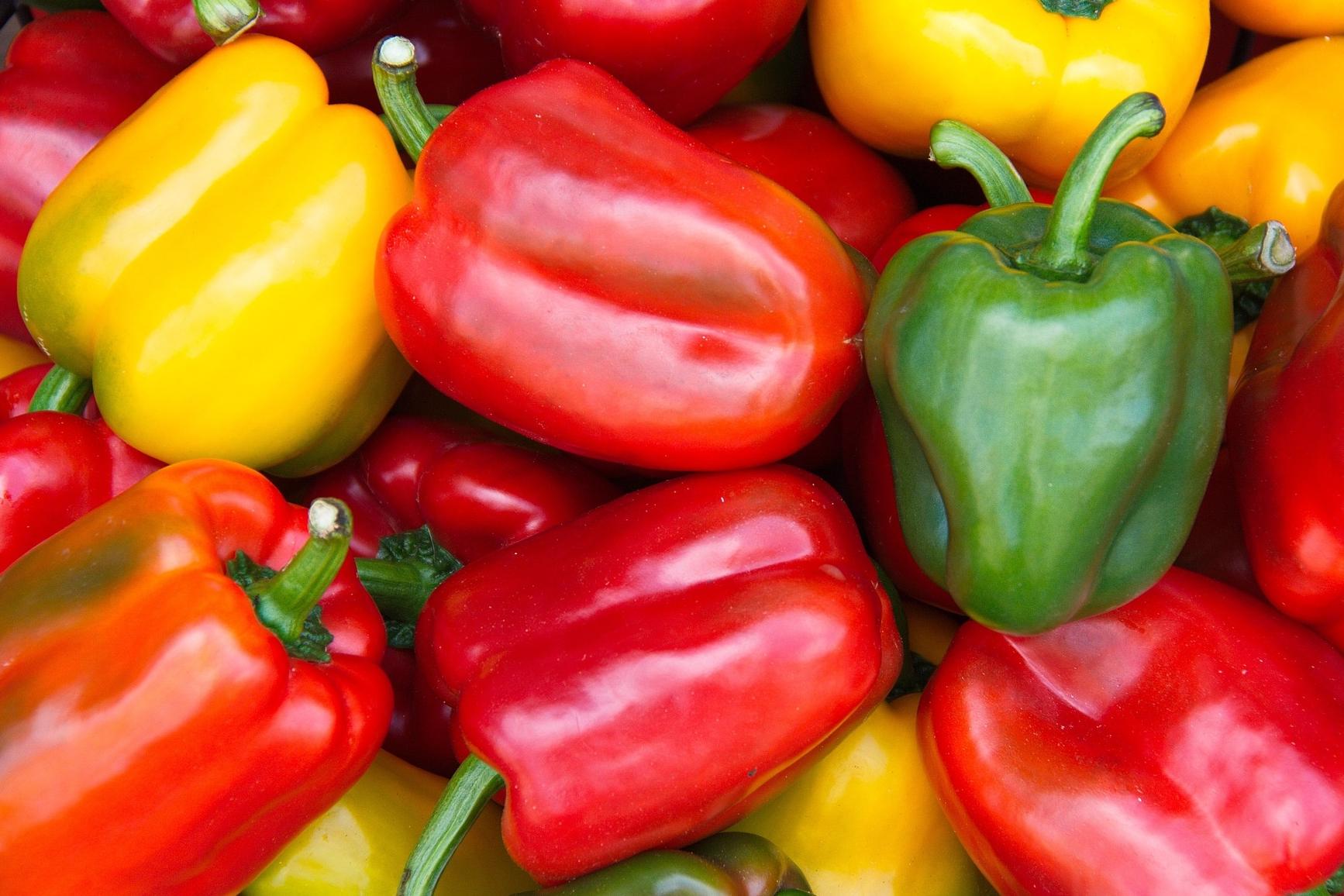 Le Maroc fournit près de 44 millions de kilos de poivrons à la France