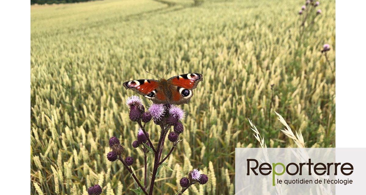 L'Europe n'a pas réussi à enrayer le déclin de la biodiversité