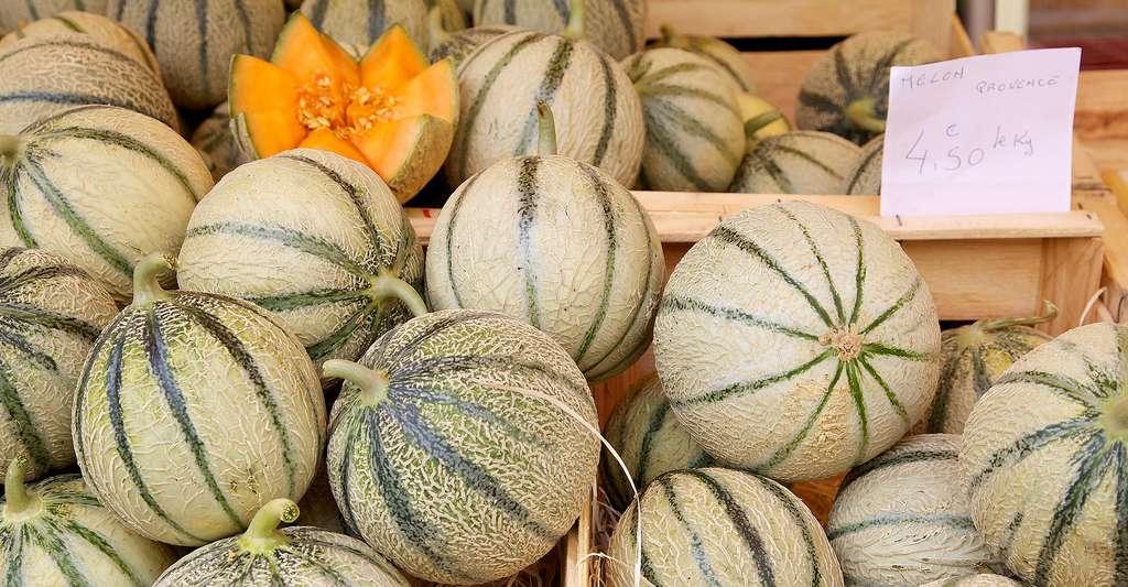 Du melon charentais espagnol Bio pourrait contenir des résidus de pesticide chlorpyriphos