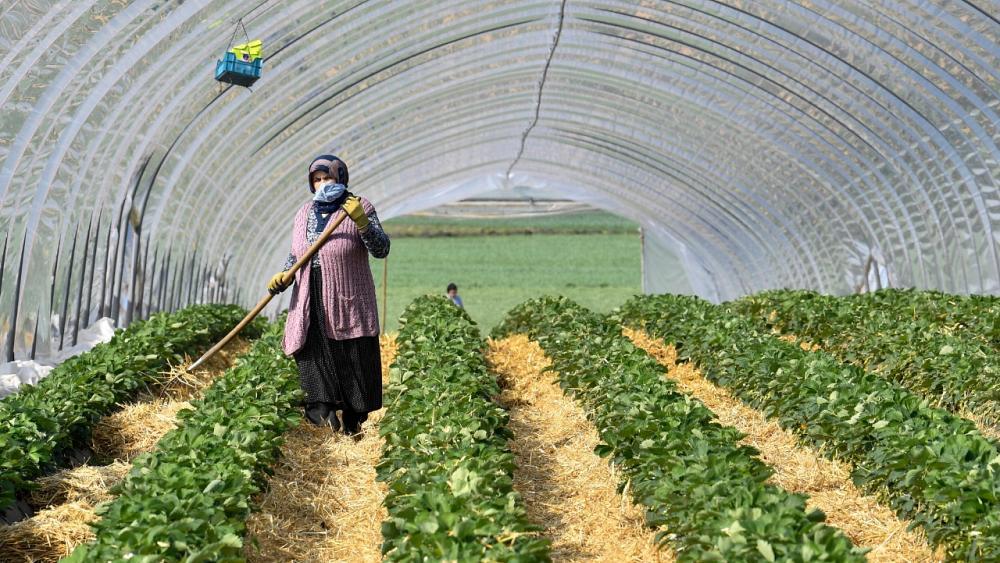 L'Allemagne lève ses restrictions à l'accueil de travailleurs saisonniers