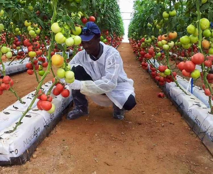 En Afrique, le coronavirus pourrait faire perdre jusqu'à 5 milliards $ d'exportations agricoles en 2020