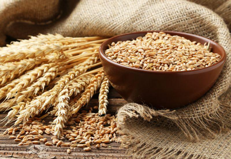 La baisse des récoltes placerait le Maroc et l'Egypte parmi les premiers acheteurs mondiaux de blé
