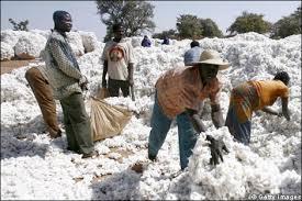 Le Mali débloque 35 milliards FCFA  pour subventionner le prix du coton
