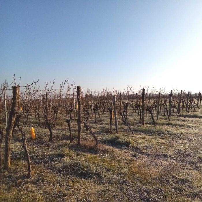 Voici quelques vues hivernales de Gironde, sud-ouest France, secteur Entre-Deux-Mers. Ici viticulture (en coteaux séchants) et grandes cultures (en vallées aux terres plus profondes) se partagent l'espace. Des paysages variés, et un riche patrimoine historique, avec bastides et villages datant du Moyen Âge... A cette saison, les céréales et couverts d'hiver (ici des féveroles) sont déjà bien développés, un peu de verdure !