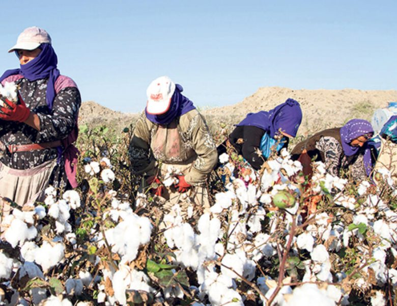 L'agriculture contractuelle : Avantage et contraintes pour l'agriculteur