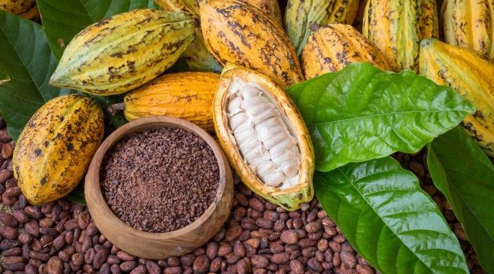 Transformation du cacao en Côte d'Ivoire