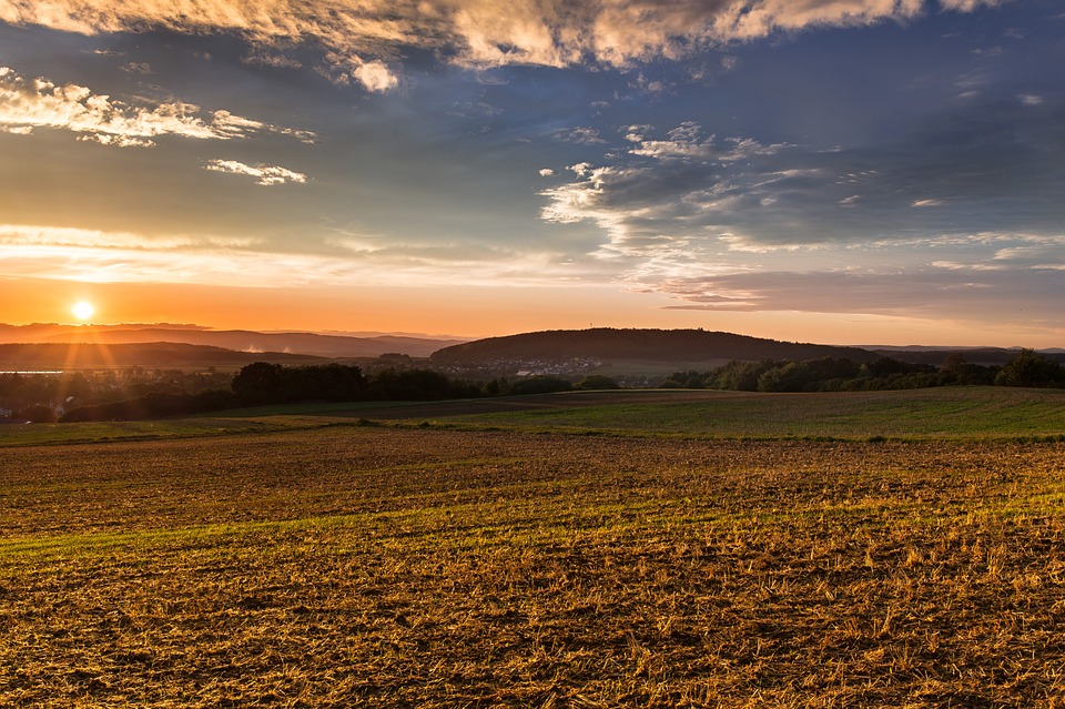 Transition agricole et alimentaire  : champ agricole